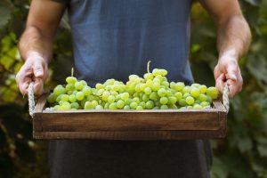 summer date ideas vineyard